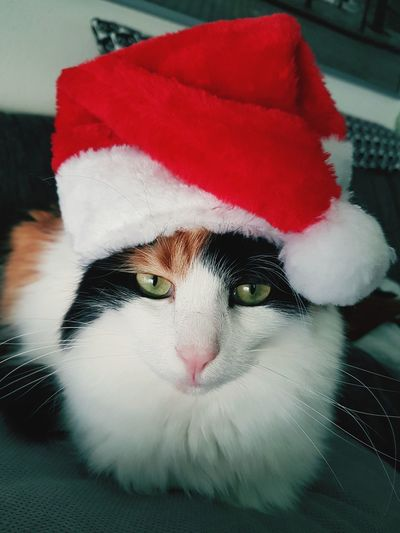 Tricolor Cat IKEA Cat Vintage Red Red Color Weihnachten Christmastime Pets Domestic Animals One Animal Domestic Cat Mammal Animal Themes Red Christmas Close-up
