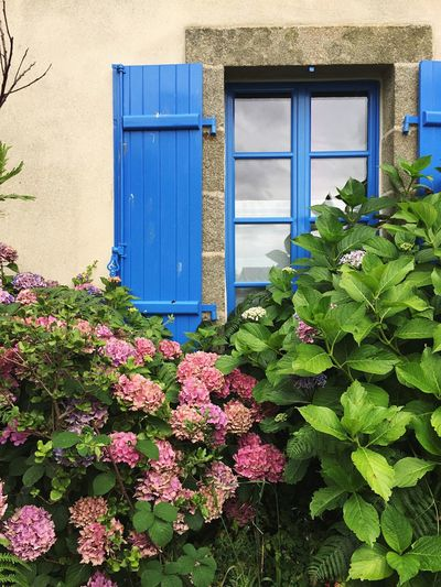 Bretagne window Growth Plant Flower Architecture No People Nature Outdoors Day Bretagne France Locronan Window