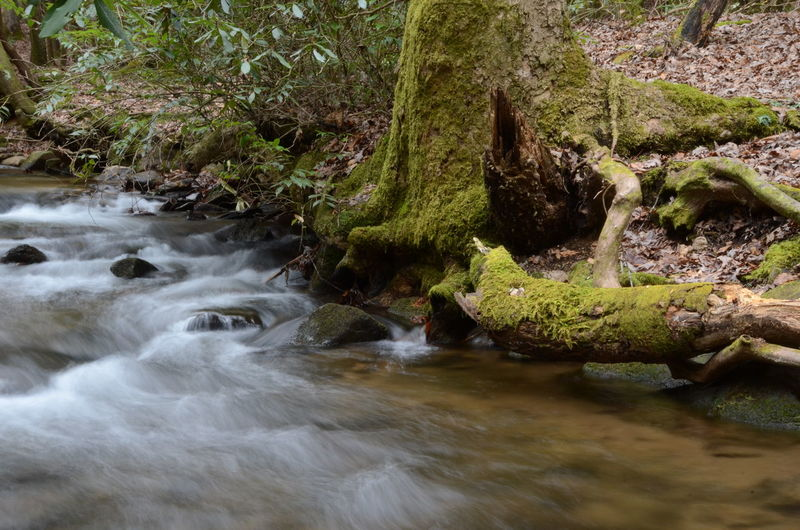 Water Motion Rock Flowing Water River Long Exposure Forest Rock - Object No People Scenics - Nature Solid Blurred Motion Nature Flowing Beauty In Nature Land Day Plant Tree Stream - Flowing Water Outdoors Rainforest Power In Nature