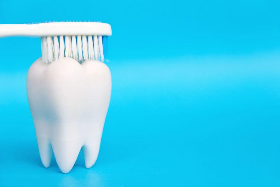 Dental Hygiene Concept Dental Dental Hygiene Dental Hygiene Concept Dentist Dentistry Blue Close-up Conceptual Photography  Day Dental Care Dental Clinic Dental Health Dentaltechnician Health Healthcare And Medicine Healthy Healthy Lifestyle No People Studio Shot Teeth Teeth Model