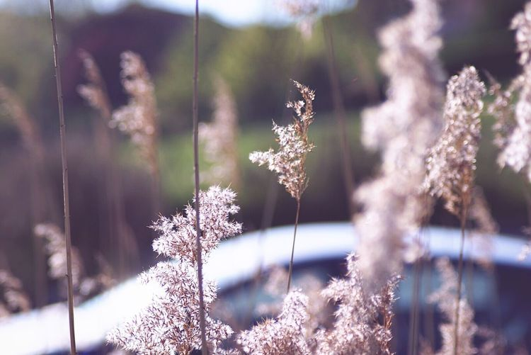 Millennial Pink Nature Growth Plant Beauty In Nature Cold Temperature Close-up No People Outdoors Winter Day Fragility Snow Freshness Spring Springtime Car Driving Travel Nature Pink Flowers Pink Flowers Holidays Blue Car
