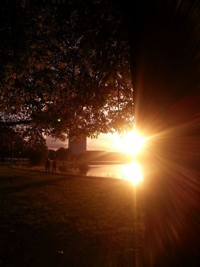 Autumn is near Shadows & Lights Playing With Sunlight Beautiful Scenery No Edits No Filters