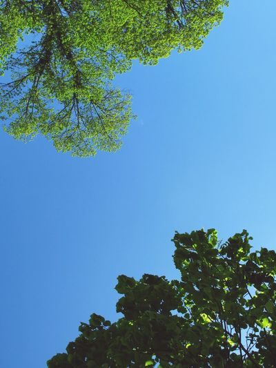 Lake Wolfgang Sky Skyscape Trees Green Two Trees Corners Freshness Looking Up Nature Double Branch Tree Branches Fine Art Photography