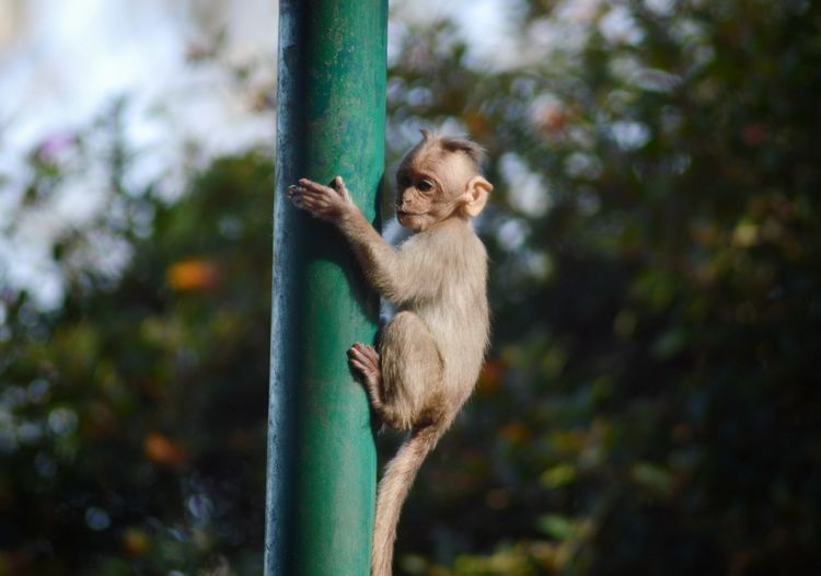 Monkey sitting on plant in forest