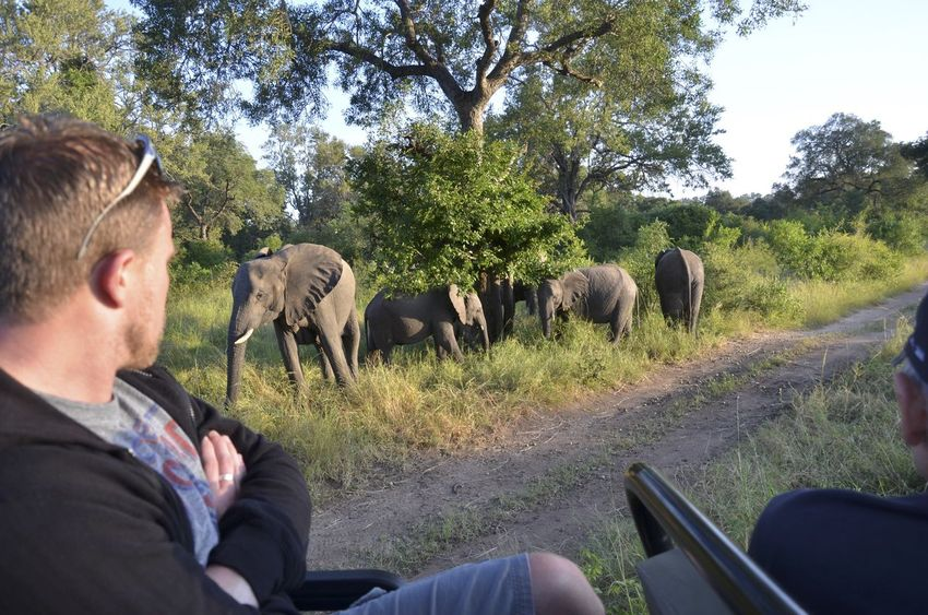 Paul South Africa African Elephant Animal Wildlife Animals In The Wild Day Domestic Animals Elephant Grass Kruger Leisure Activity Livestock Mammal Men Nature One Animal One Person Outdoors People Real People Safari Animals Tree