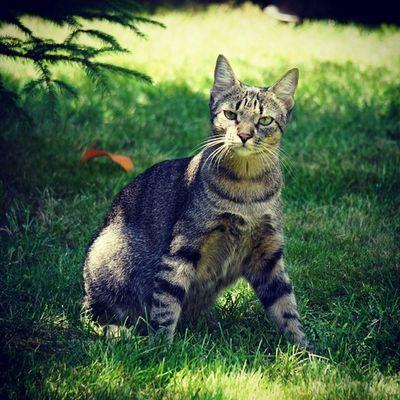 Pero cómo? Otra foto? Que no quiero más fotos! Igersitzi Igerscats Igersanimals Alpha6000 photoshoot itzisbook jardining ytodaviaquedan igerstobago