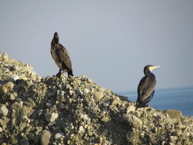 Celleligure Nature Bird Sea