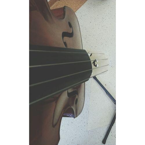 Doublebass Kontrabas Musicschool Music