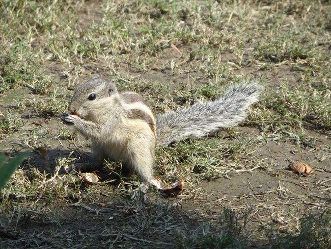 Squirrel Squirrel Closeup Squirrel! Squirrel Photo Squirrel Eating Ground Squirrel Squirrelfood Feeding Squirrels A Squirrel