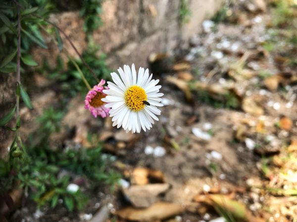 EyeEm Gallery EyeEm Nature Lover Eye4photography  EyeEm Best Shots Flower Flowering Plant Plant Freshness Fragility Vulnerability  Beauty In Nature Growth Flower Head Petal Close-up Focus On Foreground Nature Day No People Pollen White Color Selective Focus