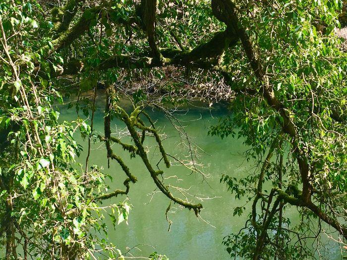 Ist Es Der Amazonas Nein Die Wutach Water Green Color Beauty In Nature Tree Outdoors EyeEm Masterclass EyeEm Best Edits EyeEm Gallery EyeEmNewHere EyeEm Best Shots Multi Colored Tranquility
