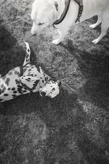 EyeEm Best Shots EyeEm Nature Lover Eyem Nature Lovers  EyeEm Best Edits EyeEm Gallery Snowflakethedalmatian EyeEm Selects Eyeem Market Eyeemdoglover Eyeemcats London Portrait Sunset EyeEmNewHere EyeEmPortraits Pets Of Eyeem Dogs Of EyeEm Doggy Love Dog Doglover Human Hand Low Section Pets Childhood Women Close-up