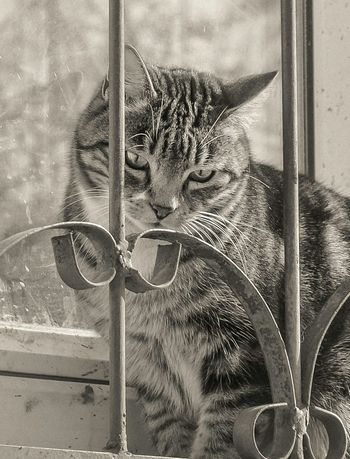 Monochrome Black & White Street Photography Photo Eyem Best Shots Taking Photos Pet Cat Eyes Hello World