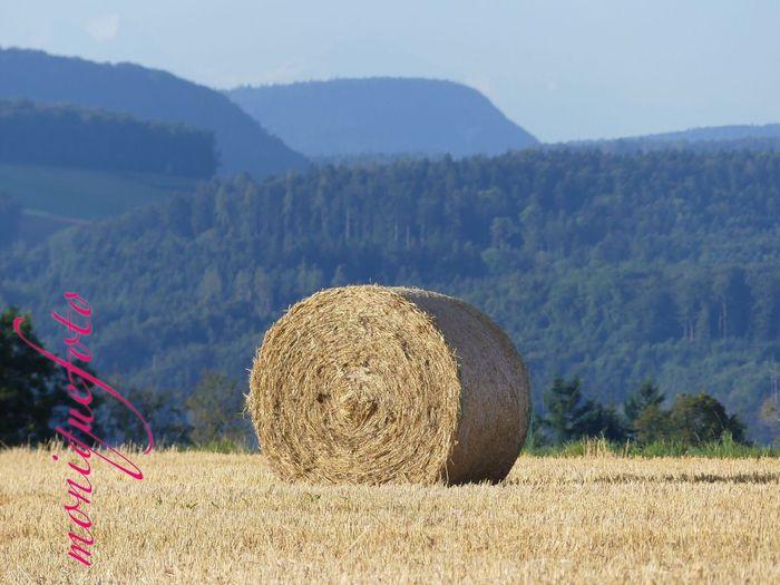 Erntezeit am Hochrhein. 💕💗 monique52 Erntezeit Strohballen Stoppelfeld Schwarzwald Hochrhein WT-Land