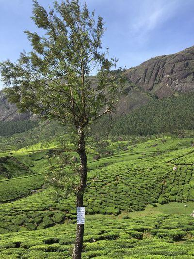 The Great Outdoors - 2017 EyeEm Awards 🌏my Life⛩ 🤠my Holidays😎 Tea Kerala