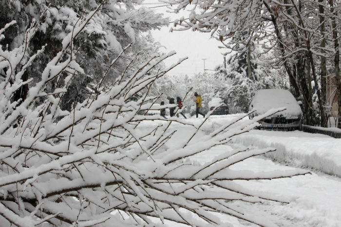 Beauty In Nature Branch Cold Temperature Covering Day Field Group Of People Incidental People Land Men Nature Outdoors Plant Real People Scenics - Nature Snow Tranquil Scene Tree Warm Clothing White Color Winter