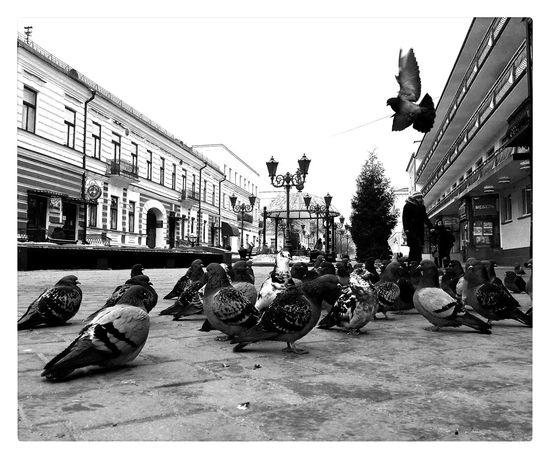 Steeet Pigeon No People Sky Day Pigeons Pigeonslife Buildings Statue Outdoors Sculpture First Eyeem Photo
