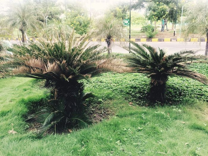 Nature Grass Tree Growth Plant Nature Tranquility Tranquil Scene Green Color Scenics Green Day Outdoors Beauty In Nature Branch Non-urban Scene Lush Foliage Park Remote No People Grassy
