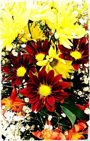 Hello World Flowerporn Autumn Colors WelcomeFall