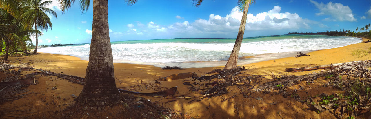 Beach Beauty In Nature Day Landscape Nature No People Outdoors Palm Tree Sand Scenics Sea Sky Travel Destinations Tree Tree Trunk Tropical Climate Vacations Water