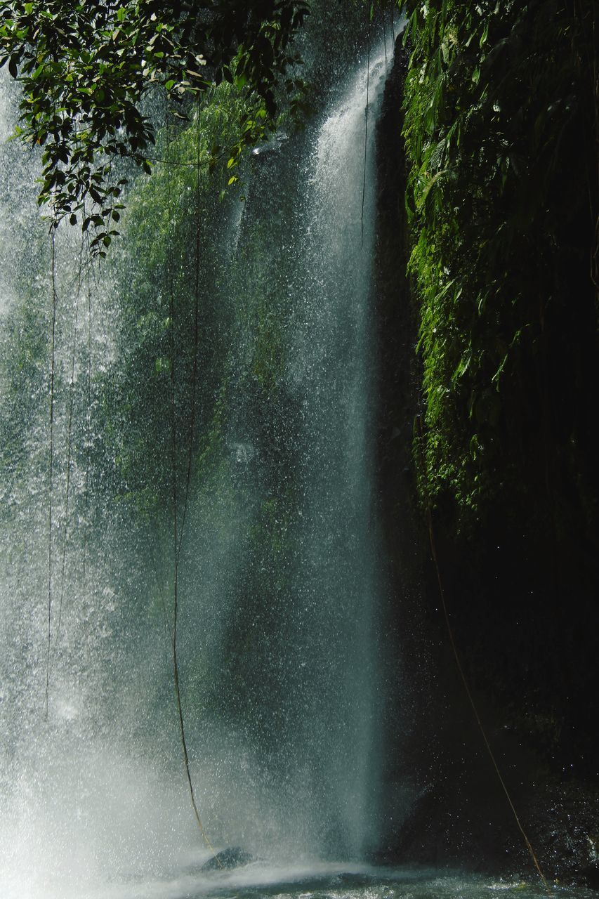 tree, plant, motion, water, forest, nature, no people, beauty in nature, scenics - nature, long exposure, waterfall, day, flowing water, land, outdoors, blurred motion, splashing, spraying, growth, power in nature, flowing, rainforest, falling water