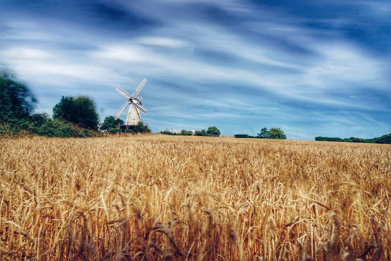 Alternative Energy Fuel And Power Generation Rural Scene Wind Turbine Field Renewable Energy Environmental Conservation Wind Power Windmill Agriculture Farm Landscape Growth Crop  Nature Environment Tranquil Scene Tranquility Scenics Sky Long Exposure