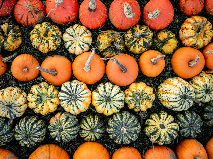 Full frame shot of pumpkins for sale in market