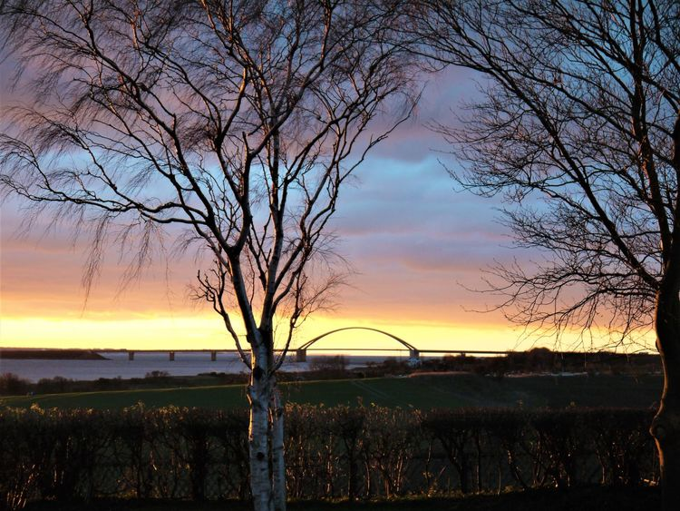 Bare trees at Sunset Bare Tree Beauty In Nature Branch Cloud - Sky Day Fehmarnsundbrücke Landscape Nature No People Orange Color Outdoors Scenics Silhouette Sky Sonnenuntergang Sunset Tranquil Scene Tranquility Tree Water