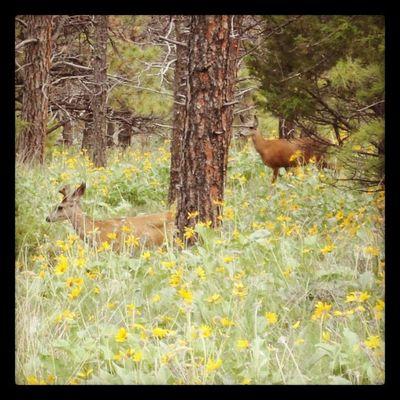 Deer Montana Hiking MtHelena