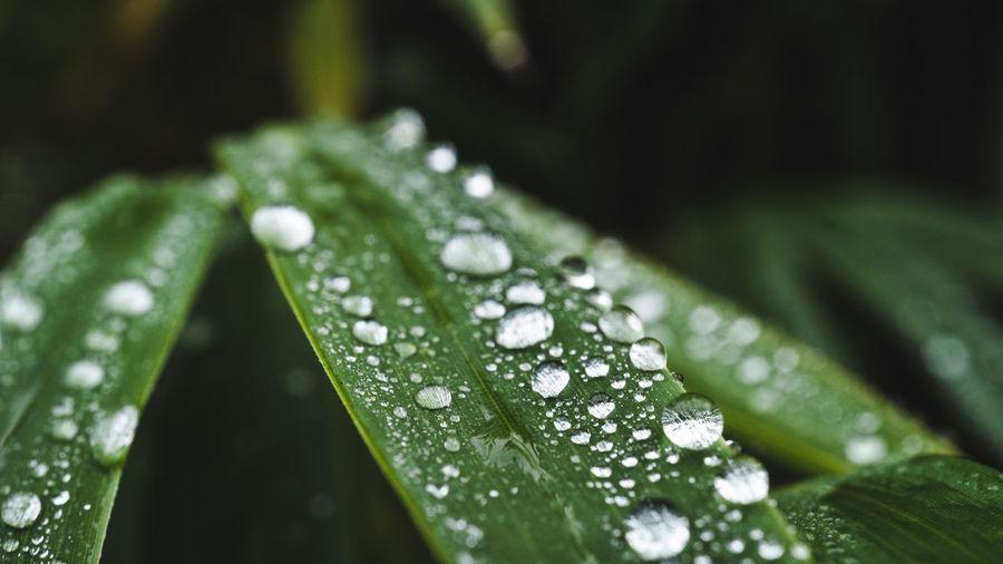Drop Wet Green