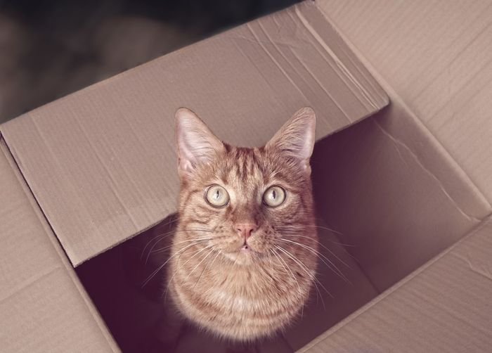 High angle portrait of cat in box