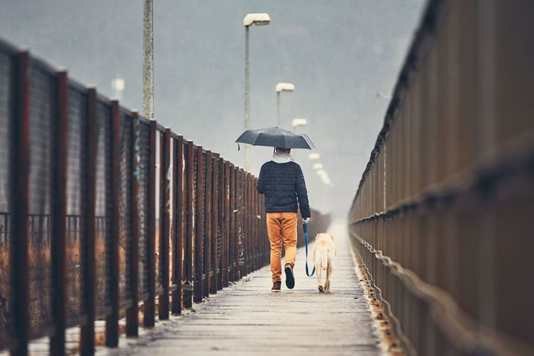Rear view of man walking with dog on footbridge during rainy season