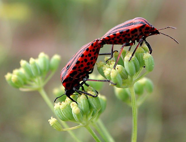Animal Animal Themes Animal Wildlife Animals In The Wild Beauty In Nature Close-up Day Flower Flowering Plant Focus On Foreground Insect Invertebrate Nature No People One Animal Outdoors Plant Pollination