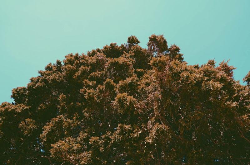 Eyeemne EyeEmNewHere Tree Branch Pine Tree Sky Green Color Close-up