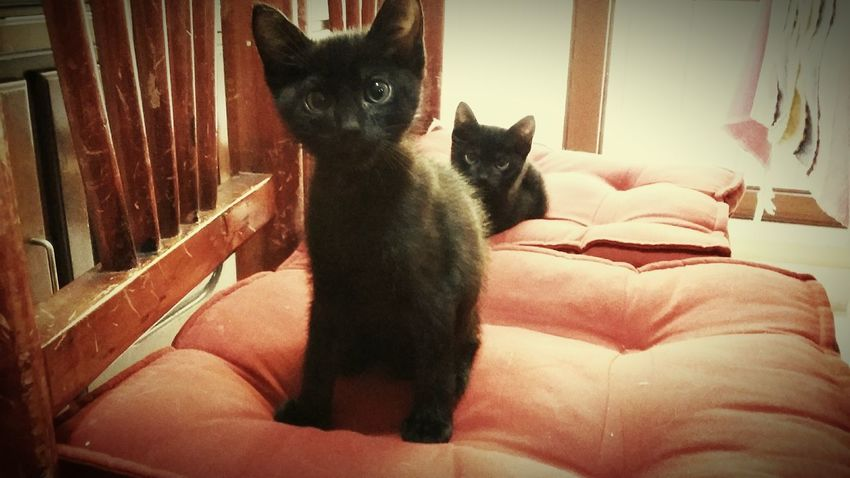Babycat Taking Photos Blackcatlove Brothers Cute Pets Green Eyes Beautiful ♥ Cute