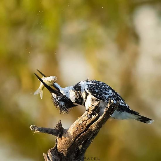 India Bird Photography Perfect_shot EyeEm Best Shots EyeEm Nature Lover EyeEm Masterclass Bird Caught Fish Wildlife & Nature Wilderness