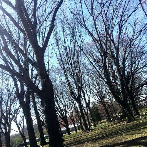 Running with the Trees Trees Running Van Cortlandt Park Summertime Summer Run Bronx