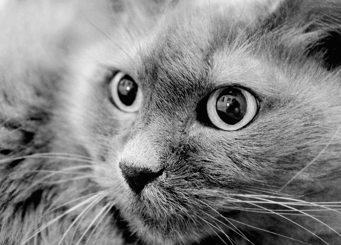 Maaaaaauuuuuu.....hi...I'm there....can you see me??? Deceptively Simple Open Edit EyeEm Best Shots Learn & Shoot: Single Light Source Cat Black & White Getting Inspired Eye4photography  Smart Complexity Cats Of EyeEm