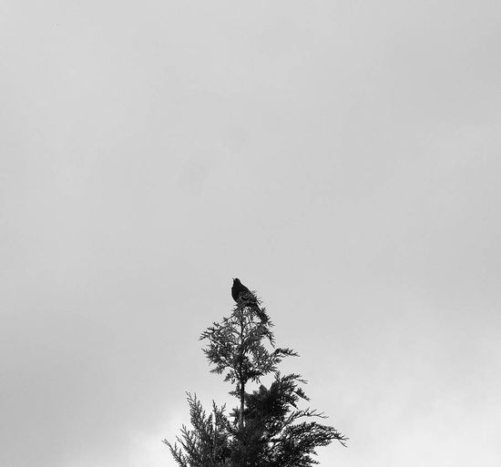 Birds Minimalism Blackandwhite Supernormal
