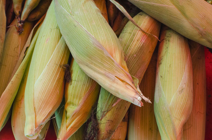 Market Corn On The Cob Corncob Cosecha Elote Freshness Green Color Harvest Picoftheday Stilllearning Tarea Themeoftheweek