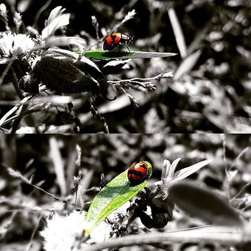 😎📷🔥 ✨✨🐞🐞🐞🐞🐞🐞🐞🐞🐞✨✨ Zenfone Zenphone2 Asus LALITHSGALLERY Artist Photography Mobilephotography Vibrant Colours Insect Timepass Naturelovers Beauty Patience Skill  Hobby LalithBhonsle Beatles Aviary Aviarychallenge