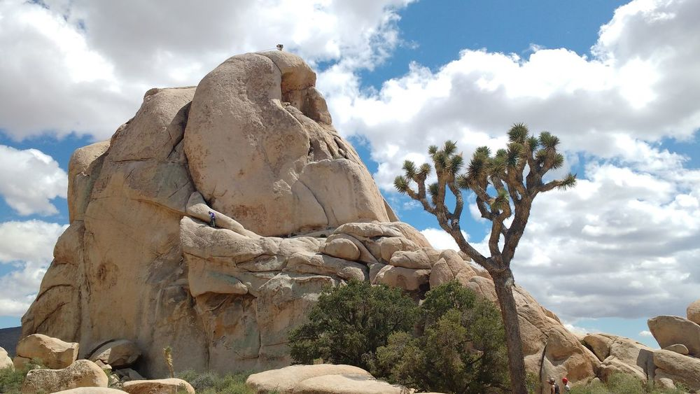 Rock Formation Rock Climbing Rock Climber White Fluffy Clouds Desert Sky Desert Beauty Clouds Sky Plants Trees Rock Joshua Tree National Park Desert Plants National Park California Desert Joshua Tree Cactus Tree Shrubs Cloud Fluffy Clouds Clouds And Sky Sky And Clouds Deserts Around The World Cactus Sculpture Low Angle View Physical Geography Outdoors Rock - Object