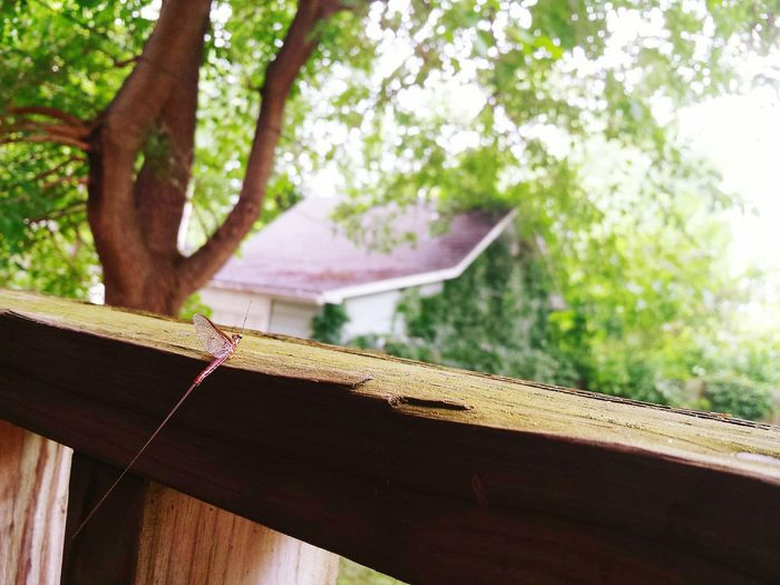 Morning coffee with a small Friend Getting Inspired Insects  Simple Things In Life Small Things Nature On Your DoorstepFrom My Point Of View Mayfly Perspective Porch Fresh 3