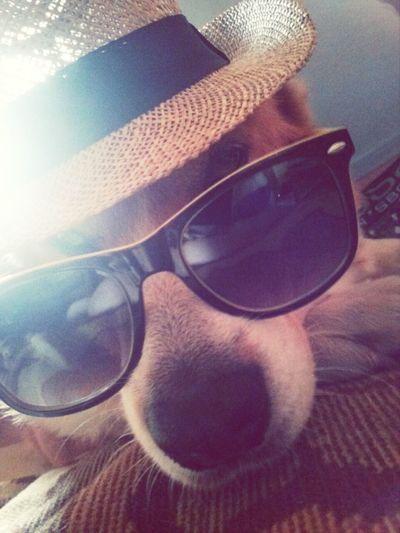 Welcome to Pogoria ! <3 . Dąbrowa Górnicza Pogoria I Love My Dog Pets