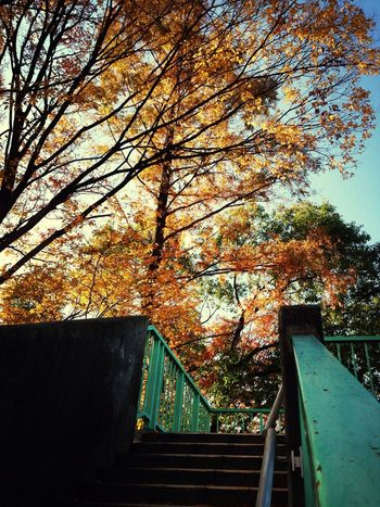 EyeEm Nature Lover Colors Of Autumn Nature_collection Autumn 箕面、自然が素敵です☻日々、自然を感じながら働けることに感謝☻