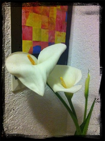 Calas Flowers