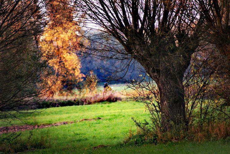 Tree Rural Scene Branch Agriculture Field Sky Grass Landscape Green Color