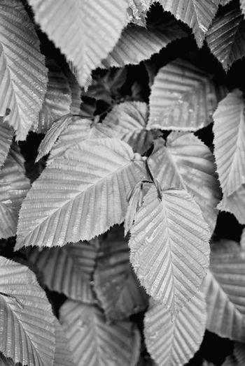 leaves Spring