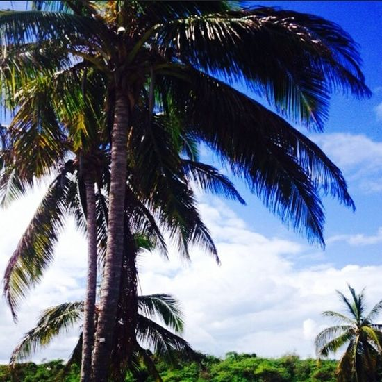 Nature Beauty Beautiful Weather Palmtrees Today Cool Fun Awesome