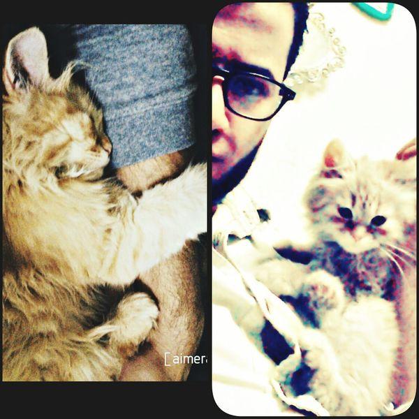 My Cat Cats 🐱 Cats Follow #f4f #followme #TagsForLikes #TFLers #followforfollow #follow4follow #teamfollowback #followher #followbackteam #followh Love It Follow4follow Likes Follow_me Taking Photo Hi✌
